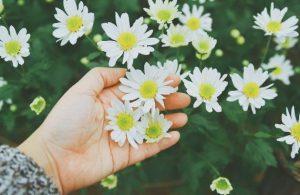 Trồng hoa tại nhà